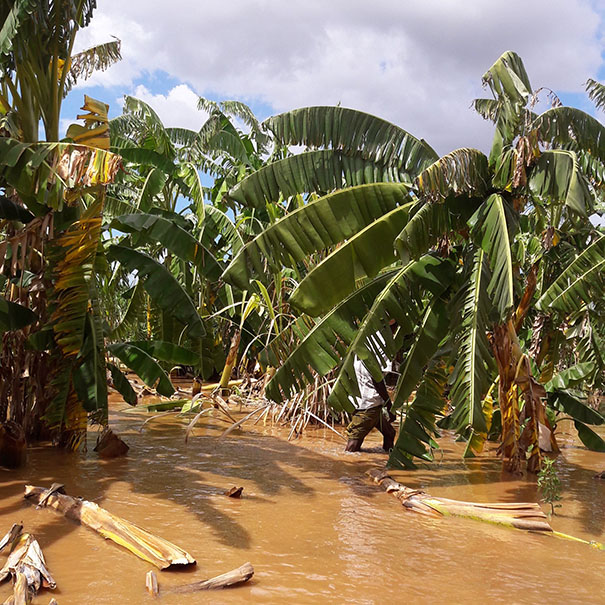 Floodwaters from Kenya's Tana River. Photo: CWS